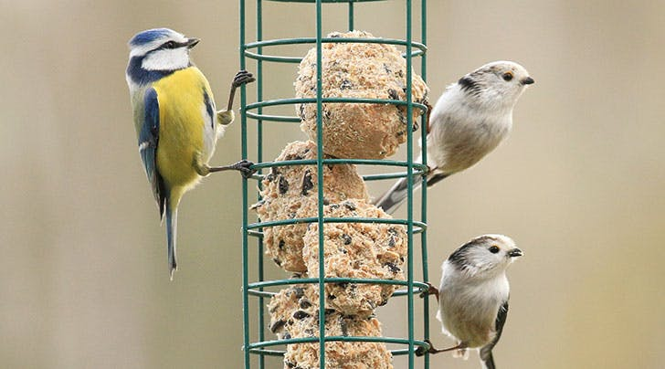 How to Make Bird Food for Your Garden
