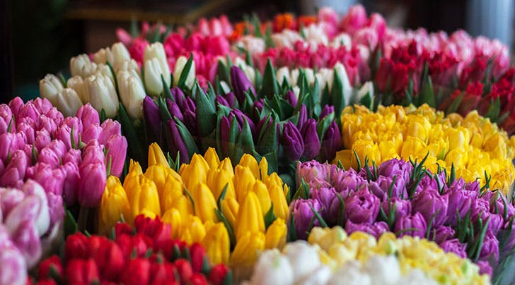 Procrastinators, Rejoice! Whole Foods Is Selling $10, 20-Stem Tulip Bouquets for Mothers Day
