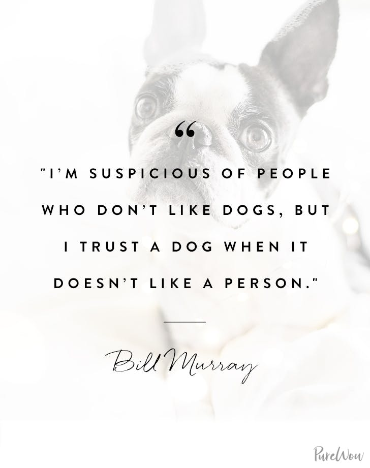 Bill Murray dog quote