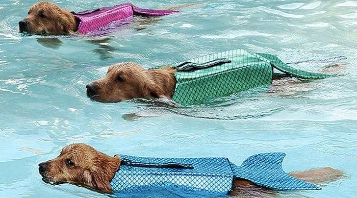 Mermaid Life Jackets for Your Dog Exist (and You Can Get Them on Amazon Right Now)
