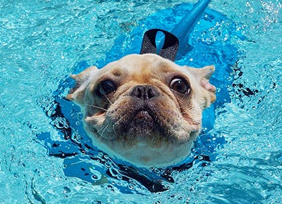 5 Pool Safety Tips For Dogs Purewow