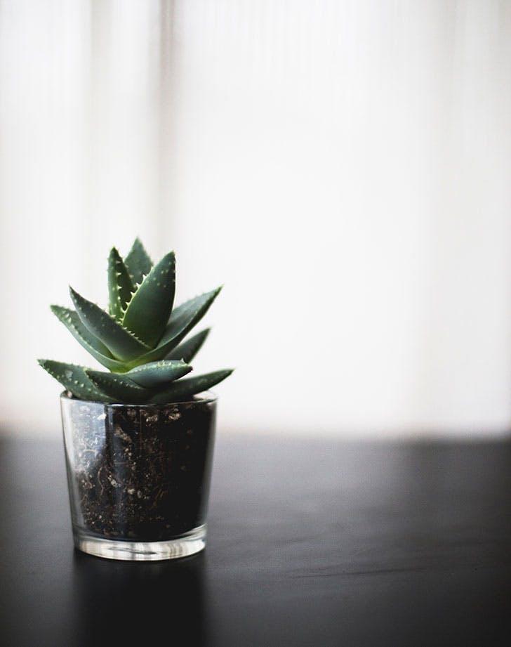 indoor succulent care 4