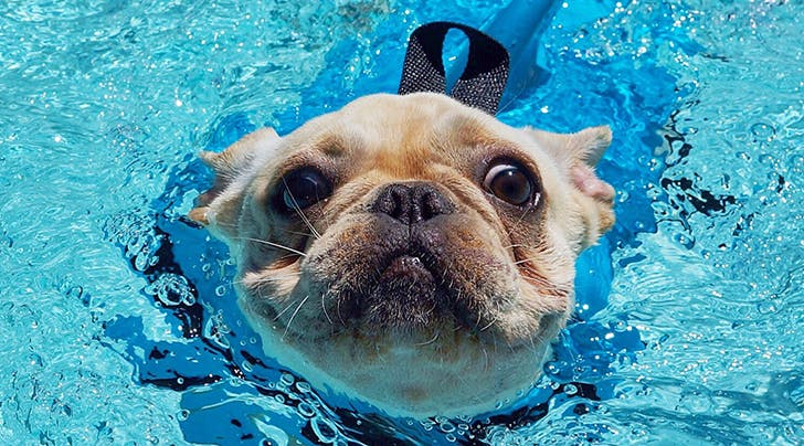 5 Pool Safety Tips for Dogs