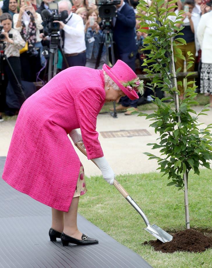 Queen elizabeth planting a tree