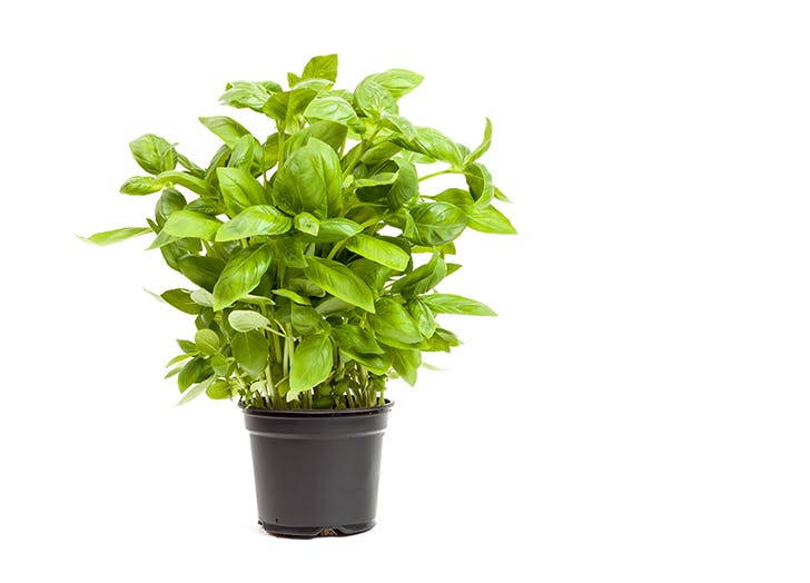 6 best herbs to grow indoors purewow - Best herbs to grow indoors ...