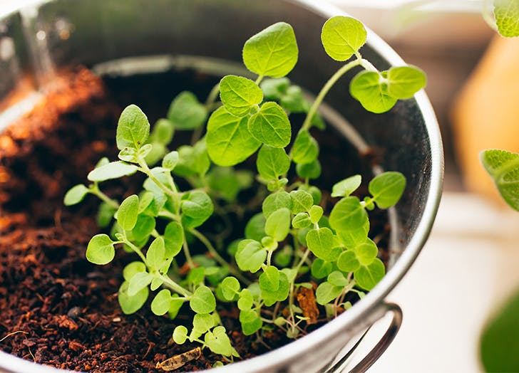 6 Best Herbs To Grow Indoors - PureWow