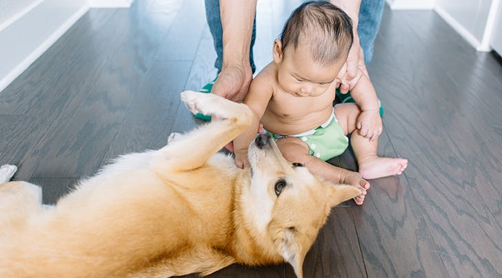 Dogs and Babies: Here's What You Need to Consider If You Want Them to Live in Harmony