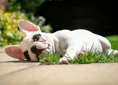 lazy dog breeds 400