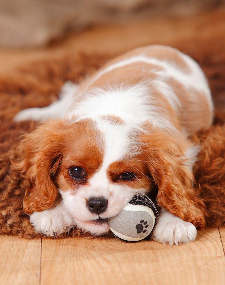 18 Low Maintenance Dog Breeds Purewow