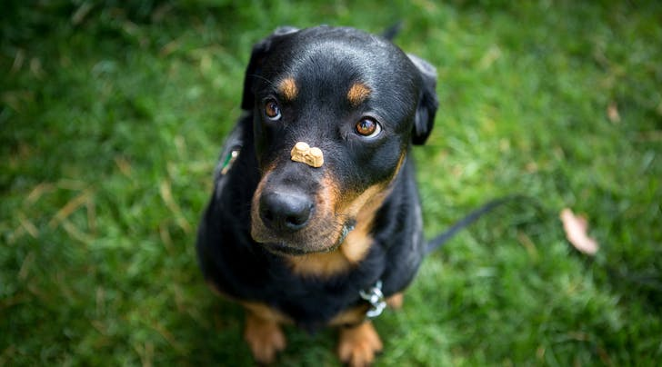 9 Training Tips Every New Dog Owner Needs to Know