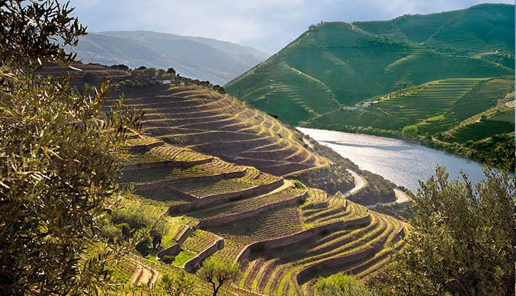 Terraced vineyards by the Douro River in Portugal