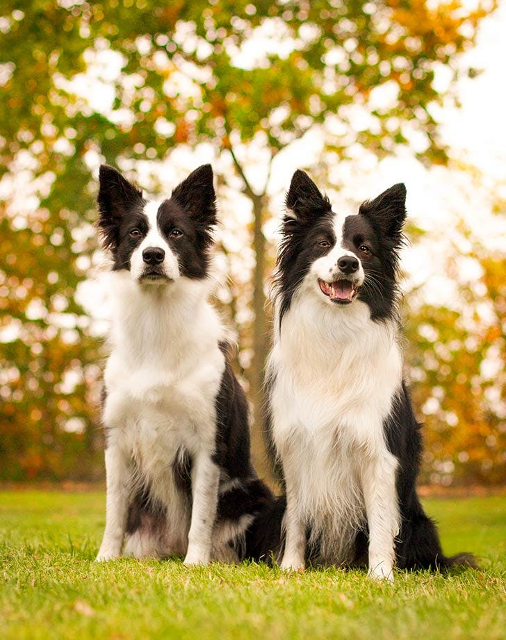22 Best Medium Sized Dogs For Families