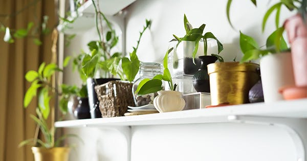 'Should I Sing to My Plants?' and Other Common Houseplant Questions, Answered