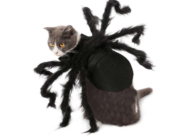 cat halloween costumes spider