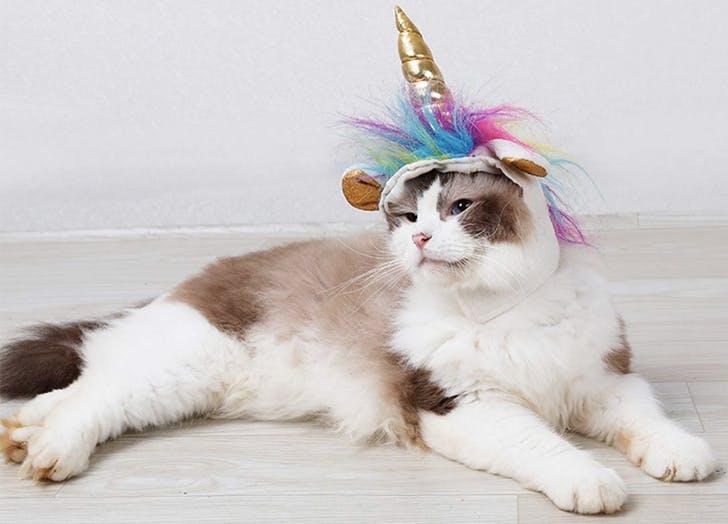 cat halloween costumes unicorn