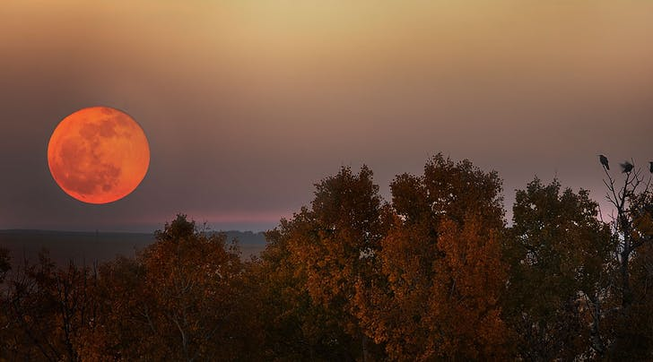 Ooooh! The Harvest Moon Is Coming, and It's Extra Special (and Sorta Creepy) This Year