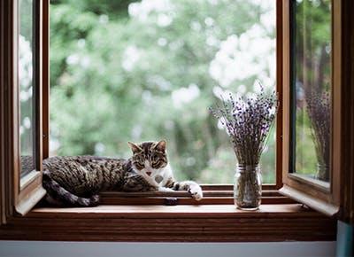 lavender cats 400