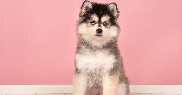 Life With Malamutes Net Worth / Feel free to join this group.