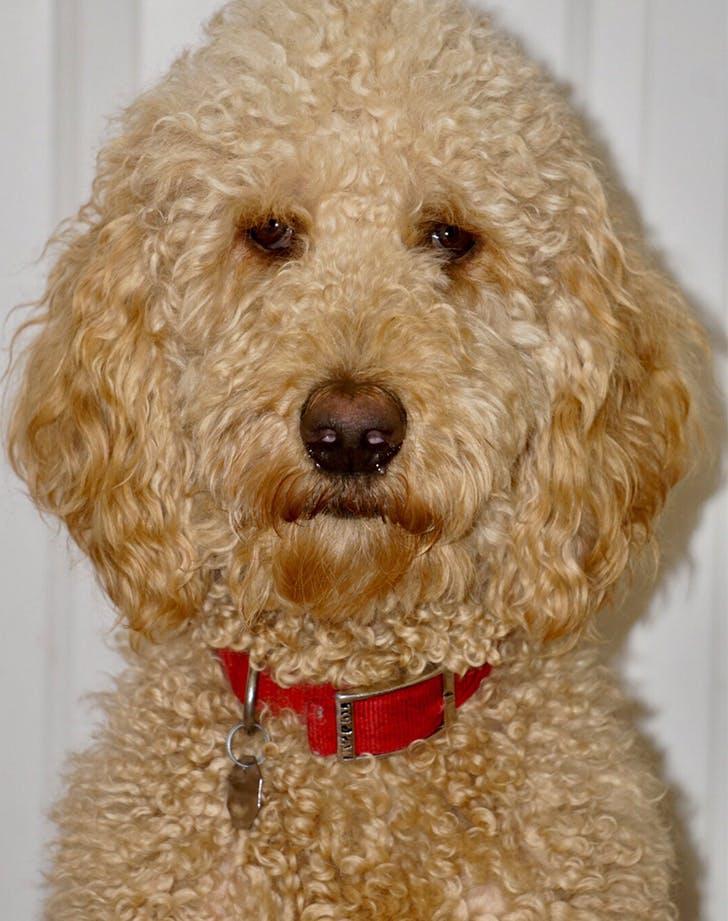 20 Mixed Dog Breeds – PureWow