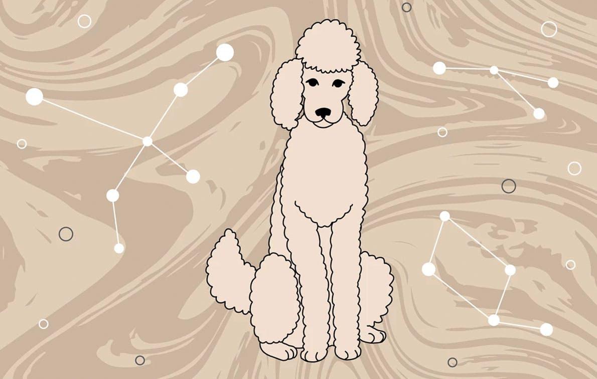 october trends dog horoscope