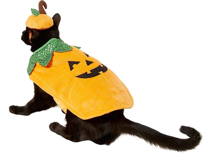 pumpkin cat costume