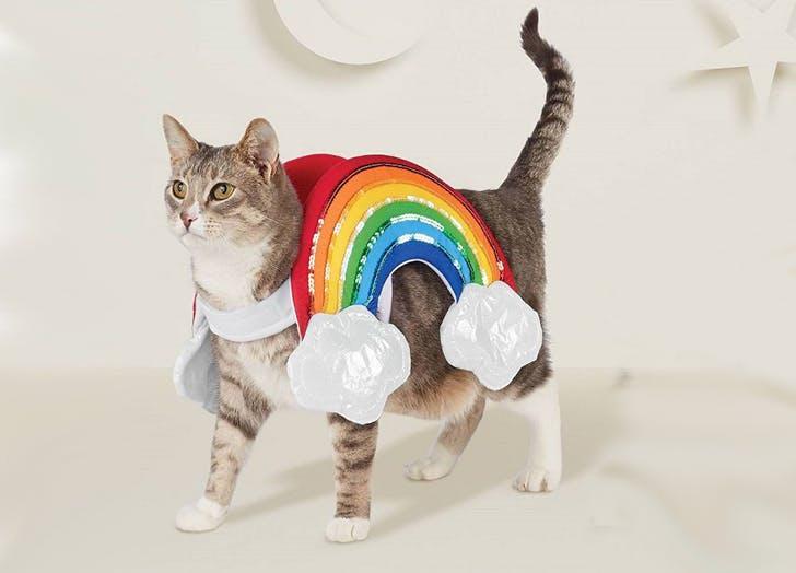 rainbow cat costume