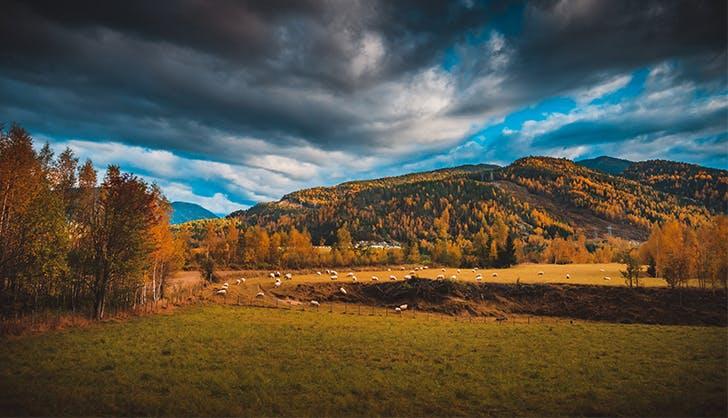 train from oslo to bergen sky