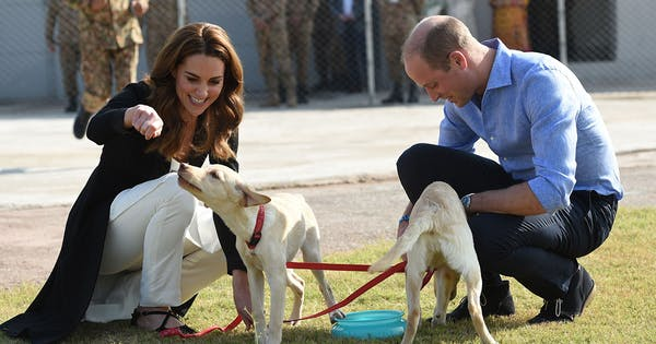 Prince William Kate Middleton Play with Puppies on Final Day of Royal Tour