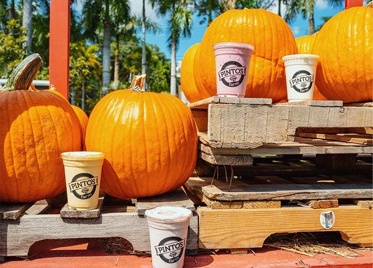 miami pumpkin patches pintos farm