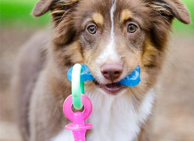best chew toys for puppues 400