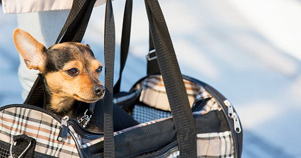 Flying with a Dog? Here's What You Need to Know About All Major Airlines