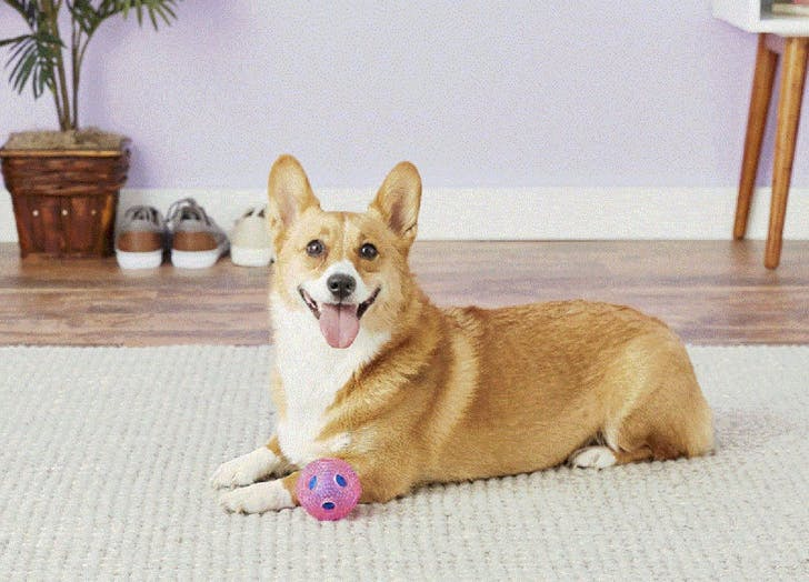 interactive dog toys furry fido ball