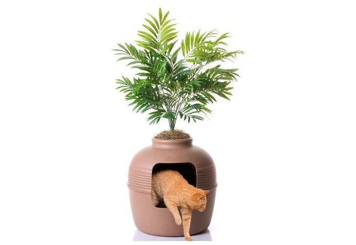 We Mistook This Litter Box for a Plant, Because It Is One
