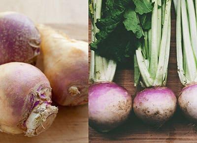rutabaga vs turnip cat