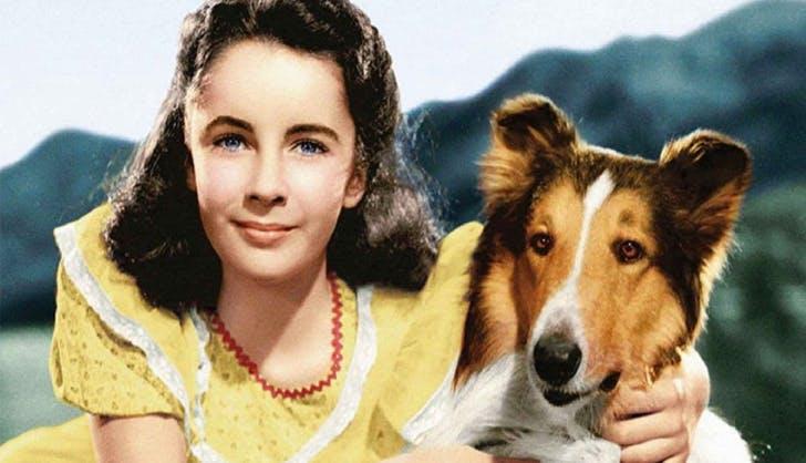 best dog movies lassie