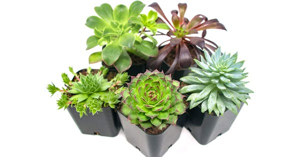 Amazon Is Having a Major Plant Sale Right Now (and You Can Get 5 Succulents for $15)