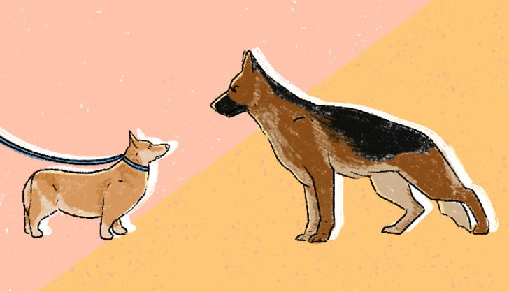 What Should You Do If an Off-Leash Dog Approaches You While You're Walking a Dog?
