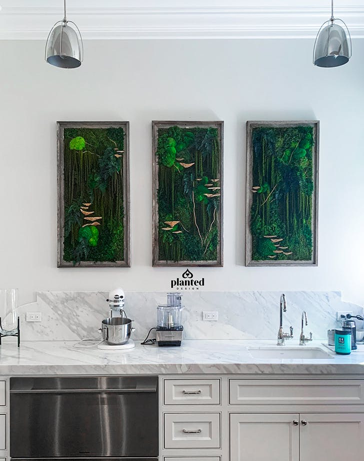 moss art in the kitchen