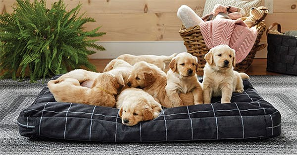 10 Indestructible Dog Beds That Are Still Totally Comfy