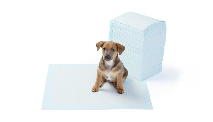 amazon pet products 1