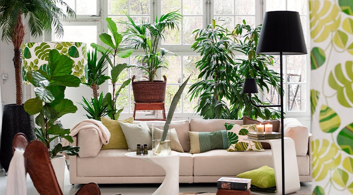 The Best Places to Buy Plants Online Right Now