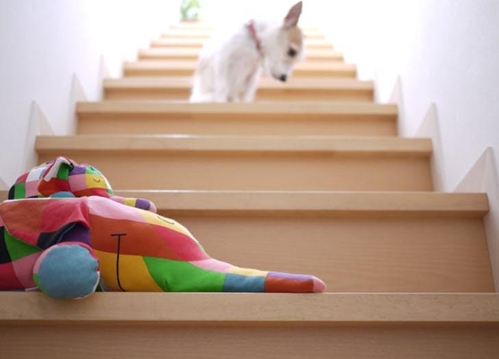 dog indoor exercise activities