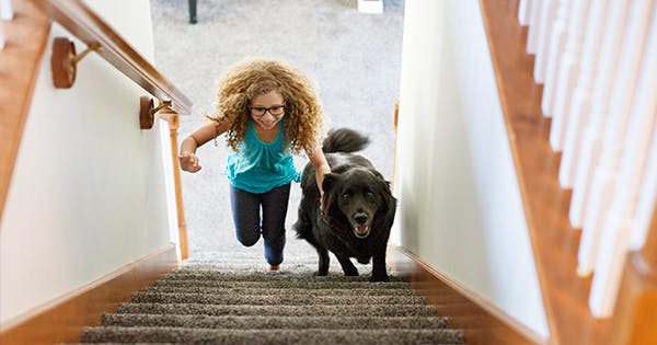 7 Genius Indoor Dog Exercises and Activities (Plus 4 Products to Help, Too)
