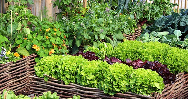 10 Ridiculously Easy Vegetables to Grow This Spring (Promise!)
