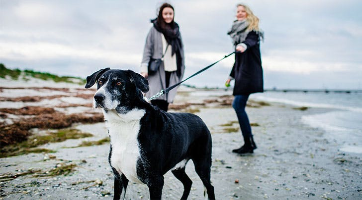 How to Stop Leash Aggression, According to Experts and Real Dog Owners