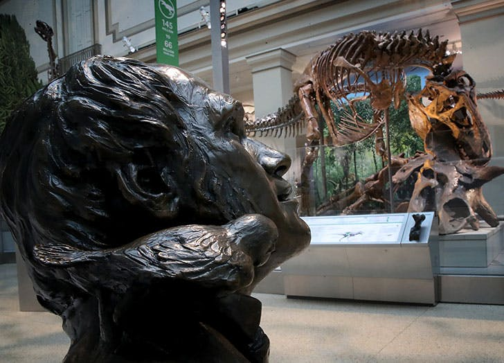 virtual musuem tours for kids natural museum of natural history