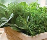 apartment gardening herb garden collection