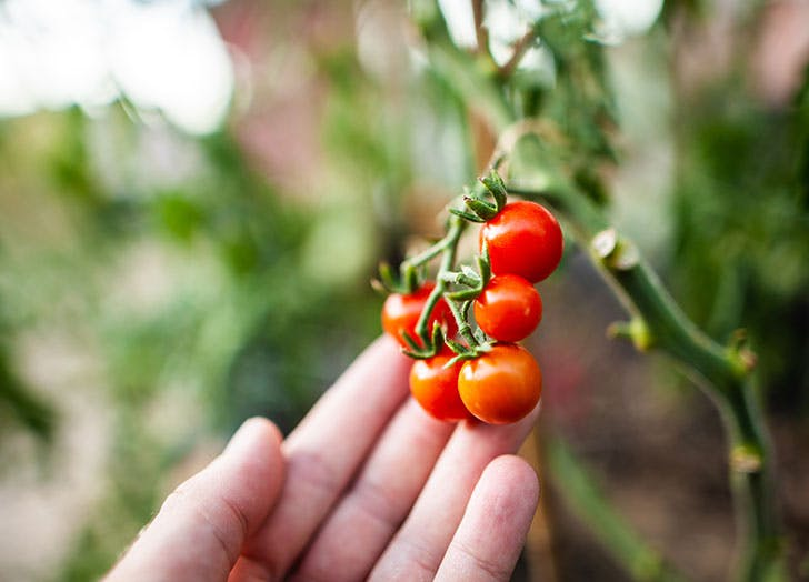 small space produce tomatoes