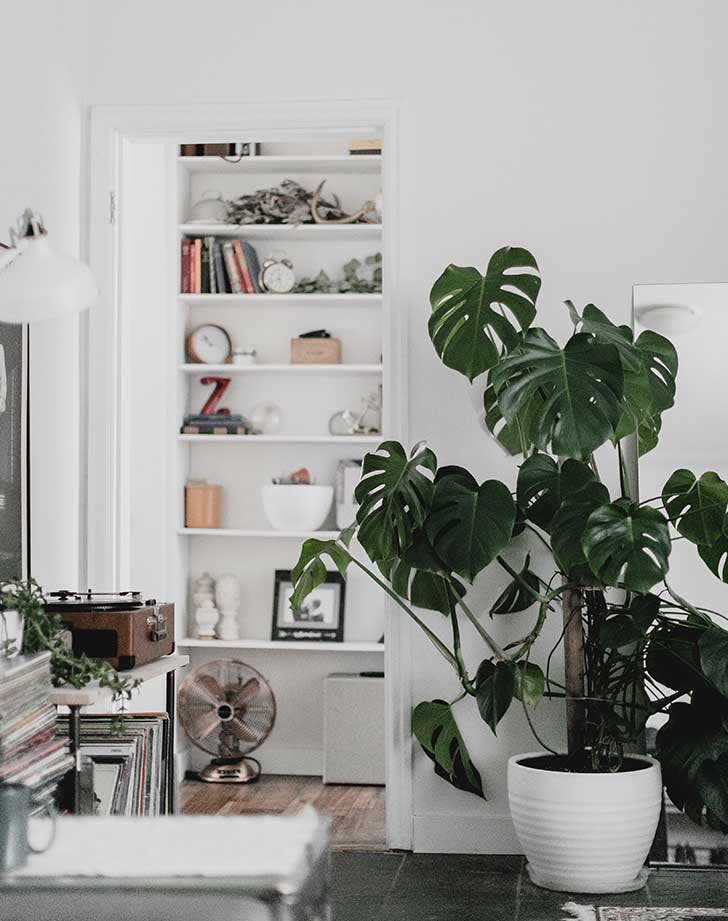 living room finishing touch plants