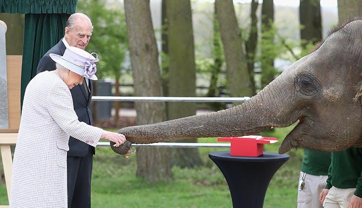queen elizabeth elephant